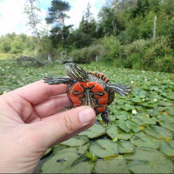 blog_turtle_pic