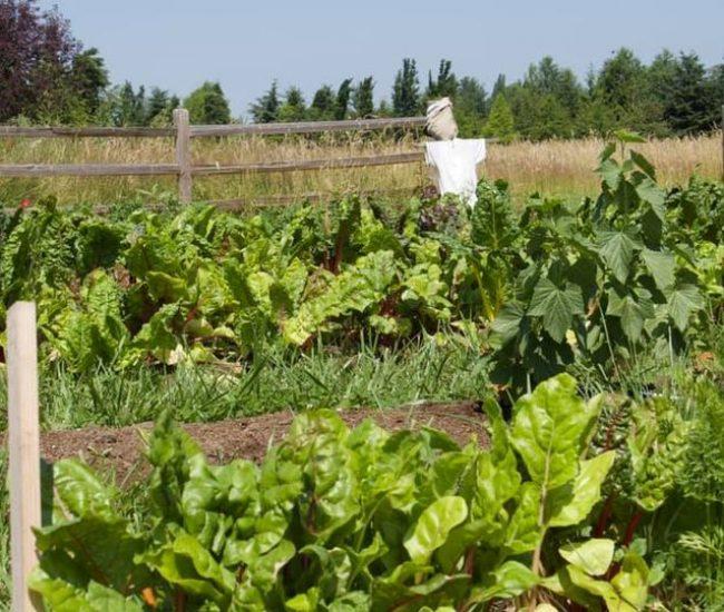 learning farm